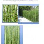 gallery 4 5 Planting mood board Apl5 300x300 1