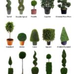 gallery-4-07-topiary